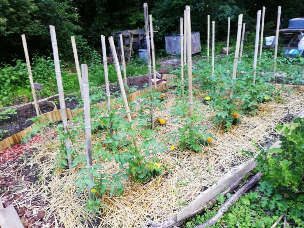 Les tomates de Chantal