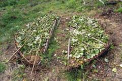 3/3 - Lasagne demi lunes : feuilles de noisetiers