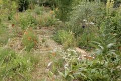 Amorce de fôret jardin