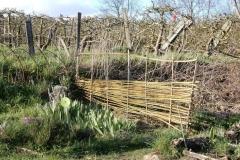 Palissade en branches de saule