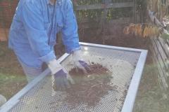 Tamisage du compost