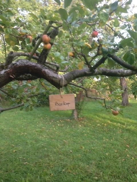 Identification des pommes et des poires