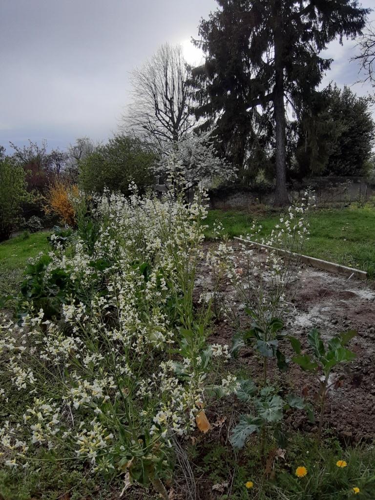 Le jardin de Margot